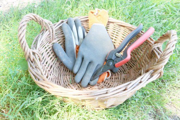 Brennnesseln nur mit Handschuhen ernten