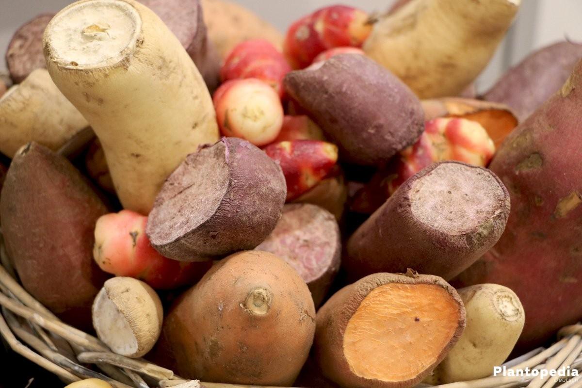 Kartoffeln sind sehr beliebt bei den Verbrauchern