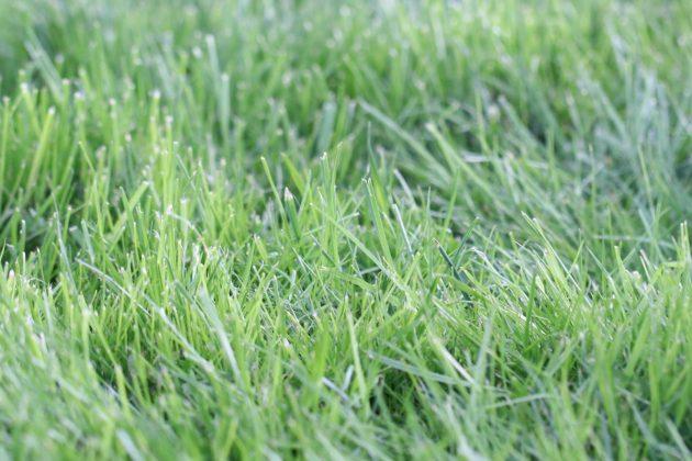 Rasen sollte richtig gepflegt werden