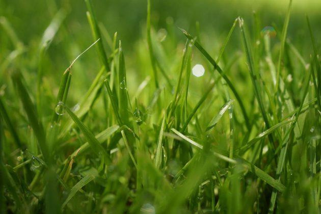 gesunder und satt grüner Rasen im Garten