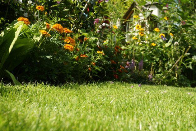 gepflegter Rasen im heimischen Garten