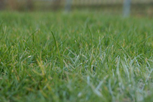Rasen im einheitlichen Grün