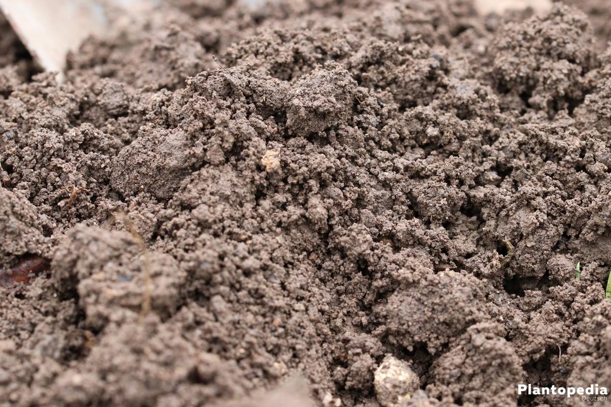 der richtige Boden für das neue Gartenbeet