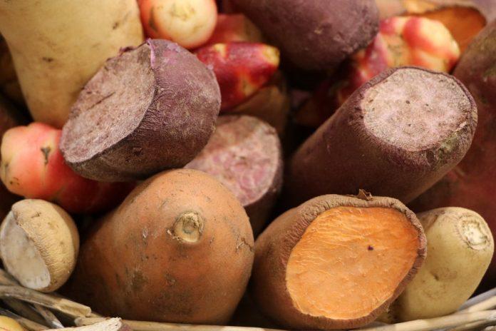 Süßkartoffeln selbst anbauen