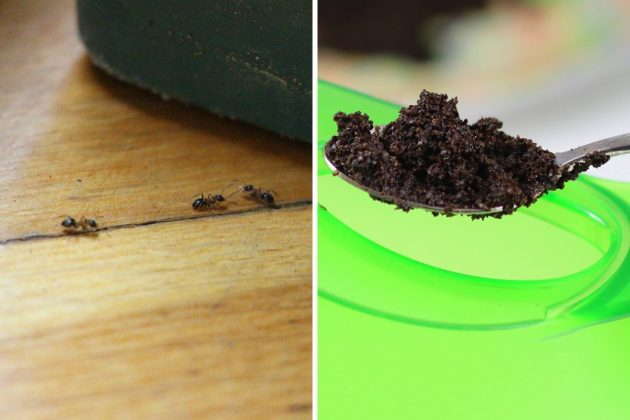 Kaffeesatz als biologisches Mittel gegen Ameisen