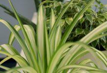 Zimmerpflanzen, die wenig Licht brauchen