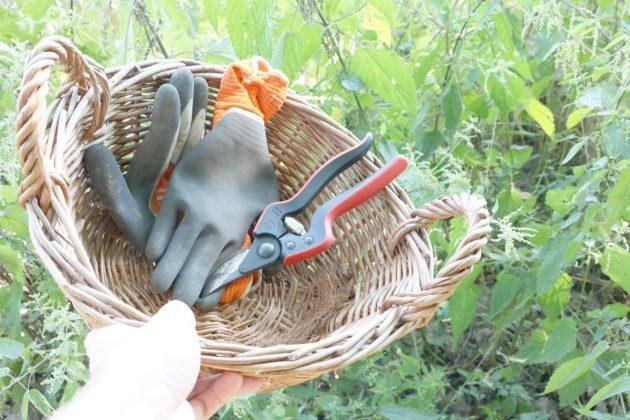 Stinging nettles manure