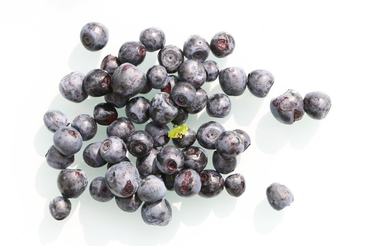 Vaccinium myrtillus, Blueberry has aromatic fruits
