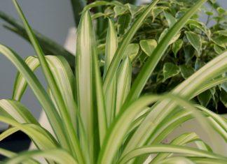 Best Indoor Plants Low Light