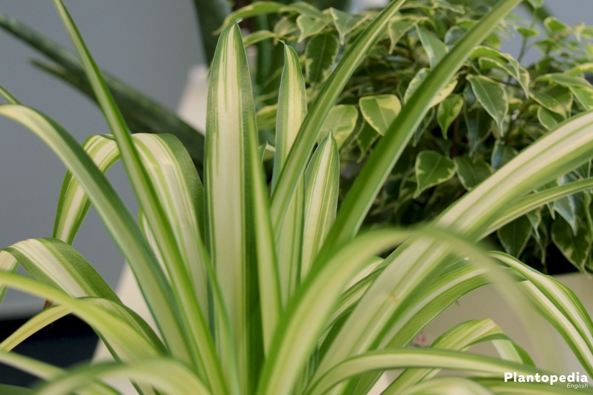 Best Indoor Plants Low Light Houseplants